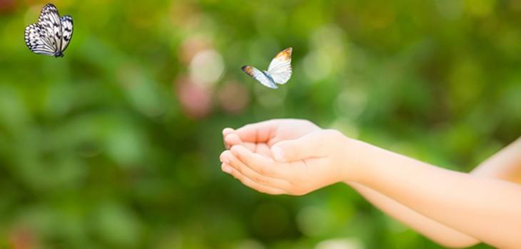 Schmetterlinge fliegen